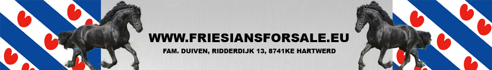Friesian Horses for Sale @ Friesiansforsale.eu High Quality logo